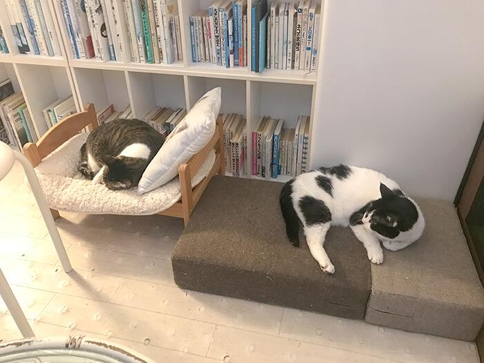 保護猫シェルターの猫