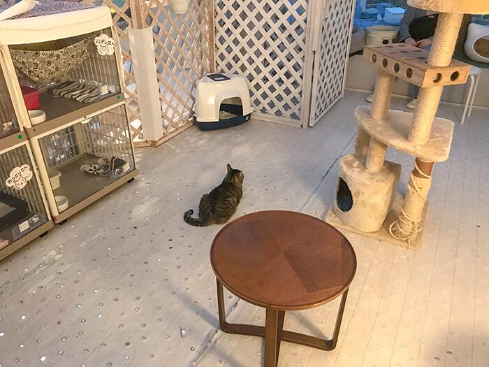 保護猫シェルター