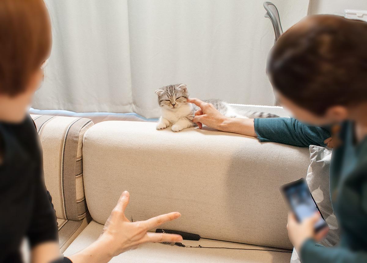 子猫と遊ぶ人たち