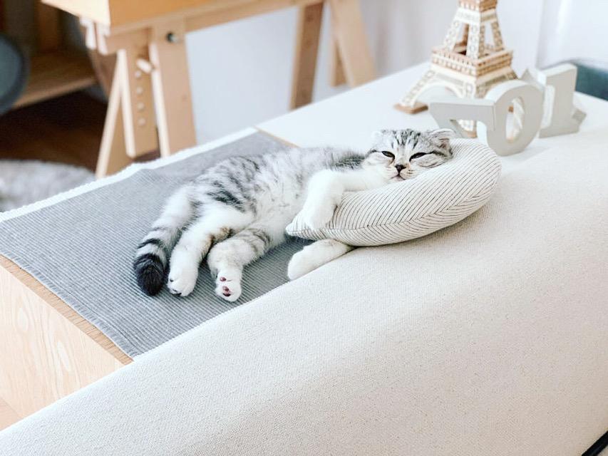 枕を抱えてくつろぐ猫
