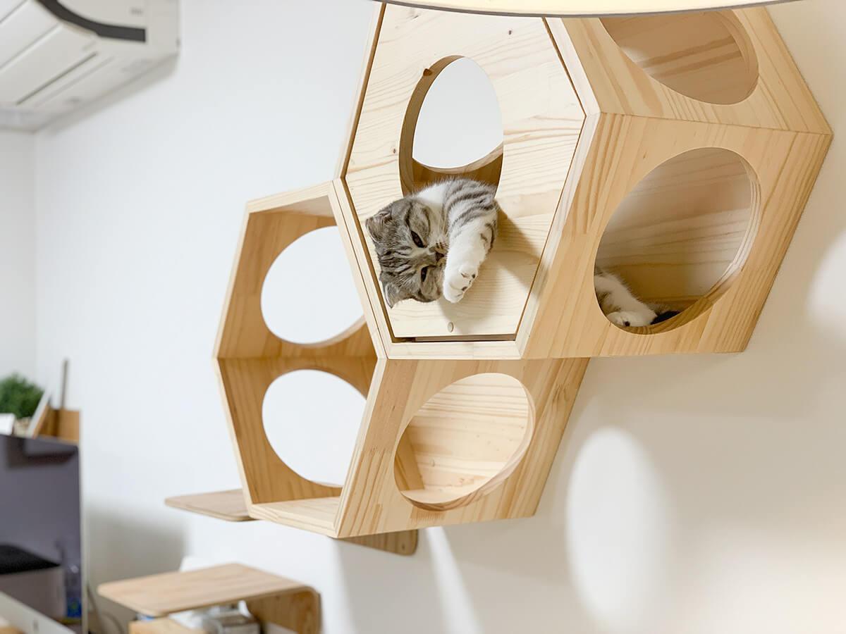 六角ハウスでまったりする猫