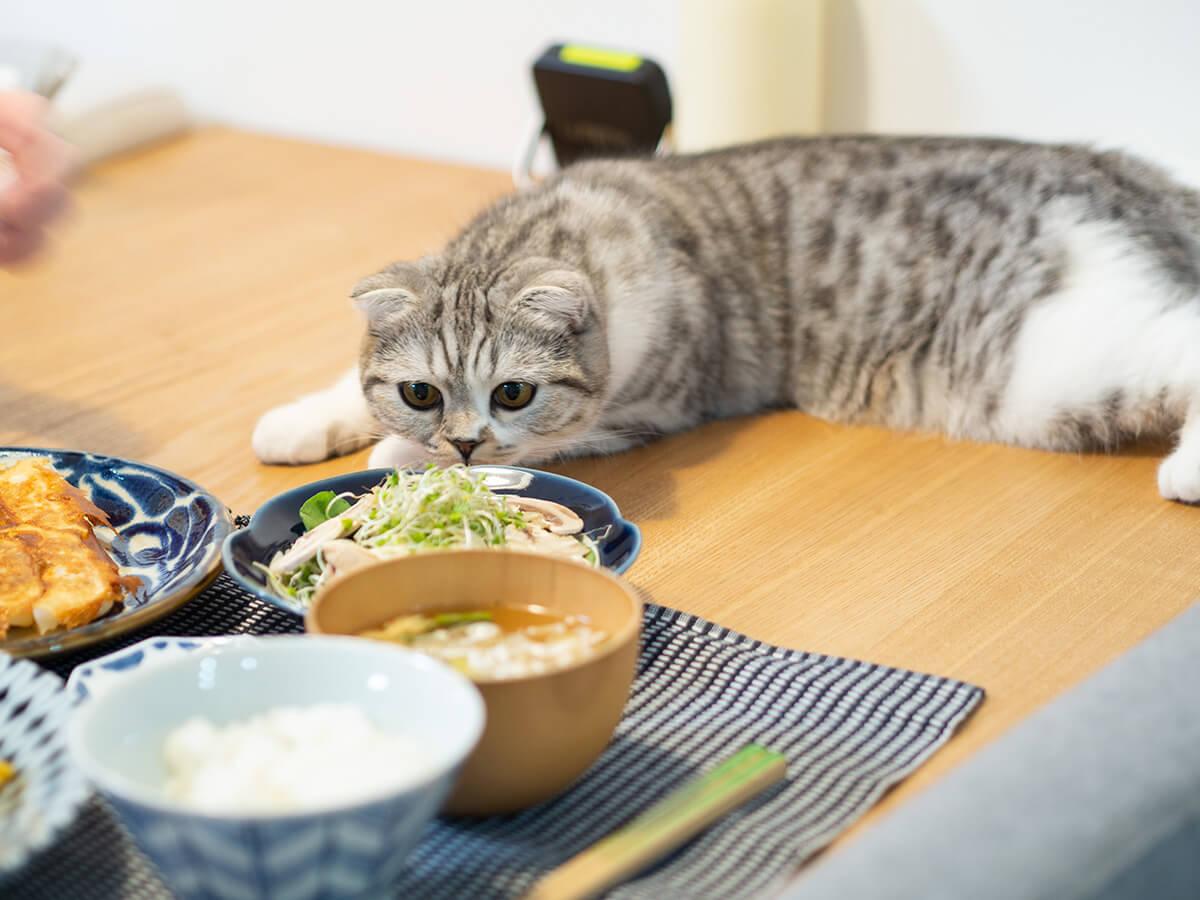食卓のご飯を狙う猫