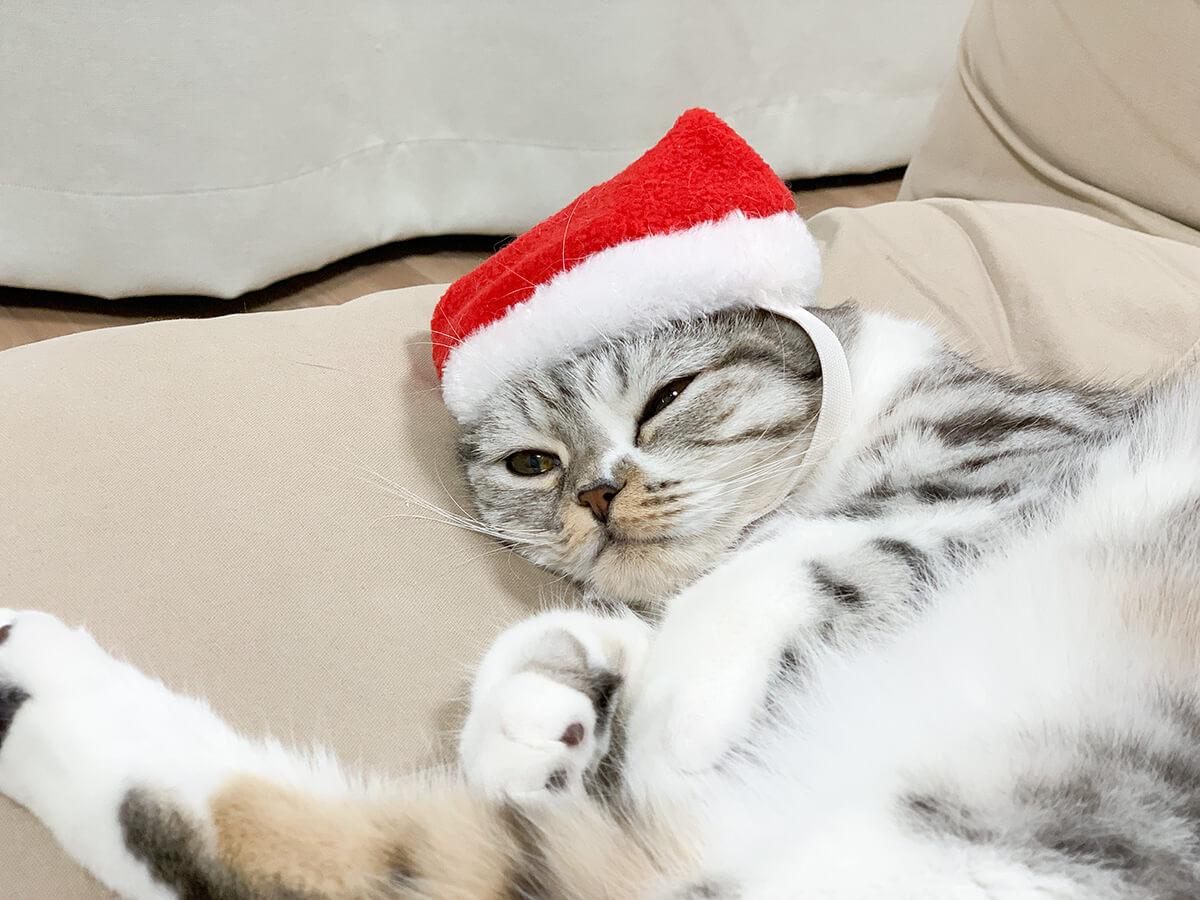 クリスマスの帽子をかぶってる猫