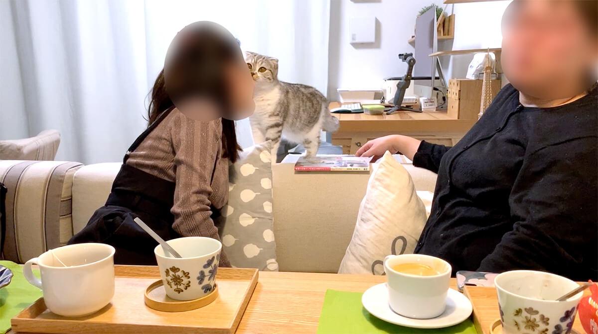 猫と遊ぶ様子