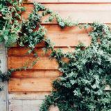 壁につたう植物のイメージ