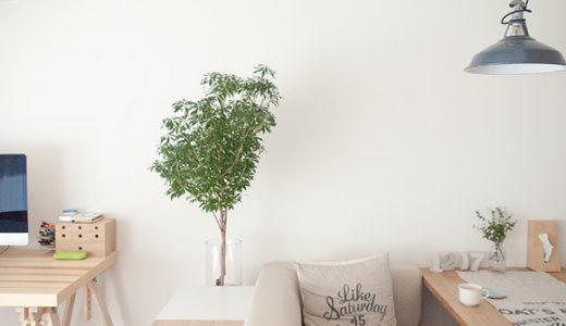 ウチの観葉植物に驚いた3つの出来事。