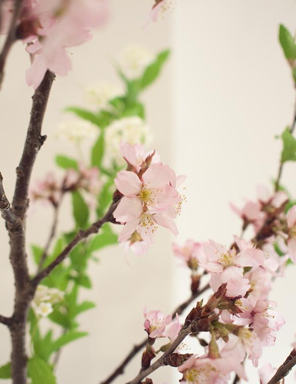 啓翁桜と小手毬