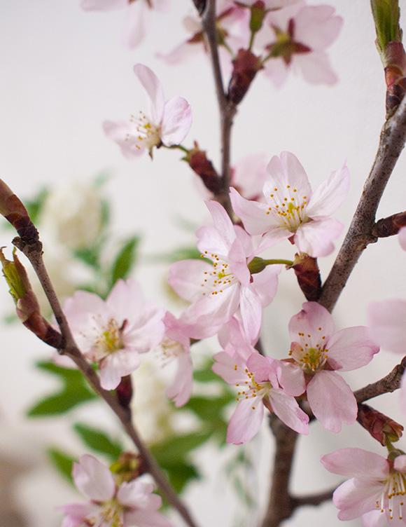 青山フラワーマーケットで買った啓翁桜