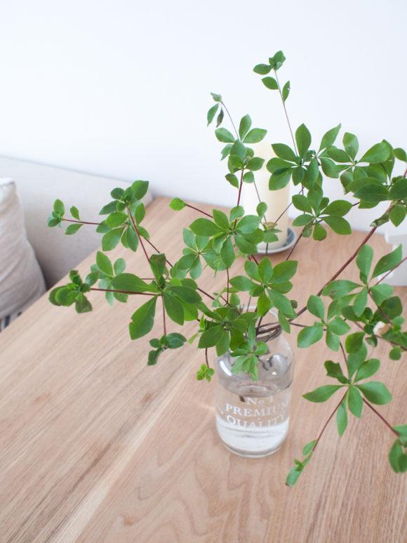 インテリア ドウダンツツジ 枝 観葉植物