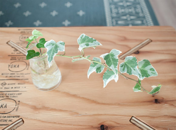 アイビー 観葉植物