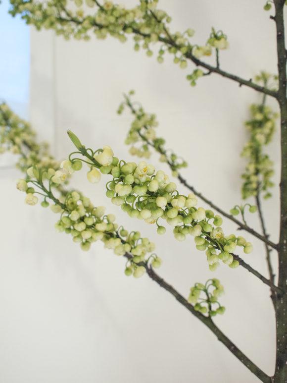 枝もの 春 青文字
