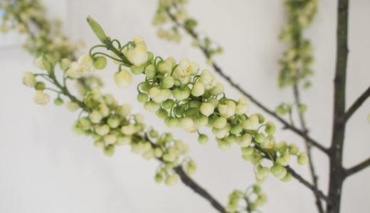 玄関とダイニングのグリーンを春の枝物にチェンジ