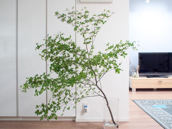 枝物 インテリアグリーン