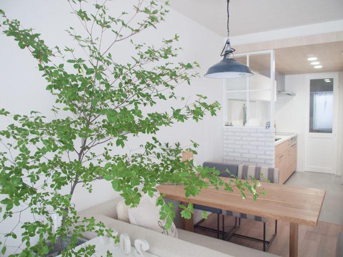 観葉植物のある部屋