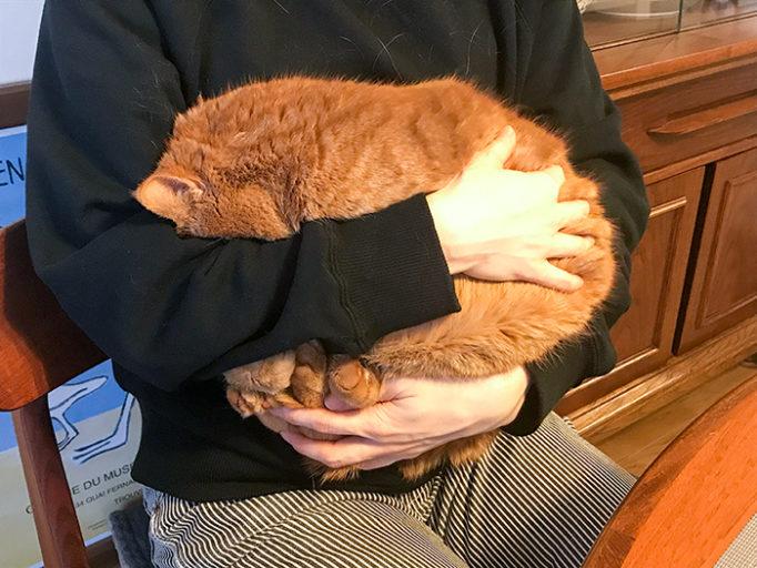 猫を抱っこしてる写真