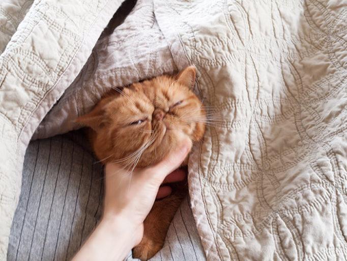撫でられている猫