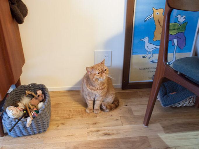 床に座る猫