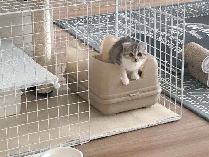 キャットワレを使ってる子猫