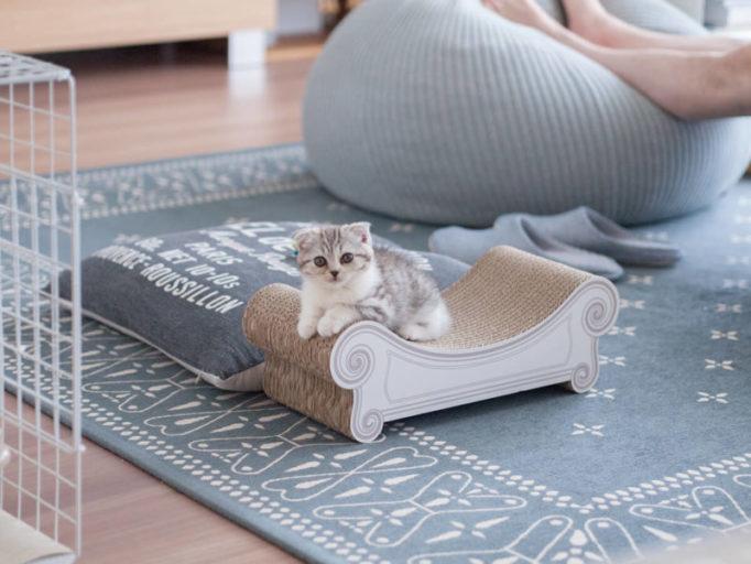 爪とぎスツール、カリカリーナの上でくつろぐ猫