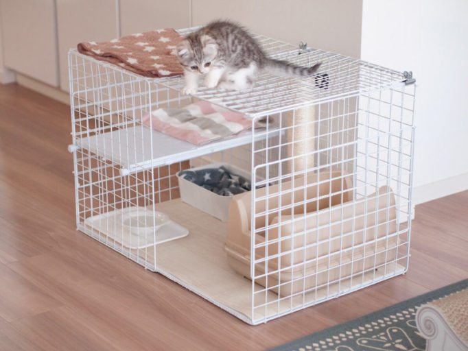 猫ケージの上に乗る子猫