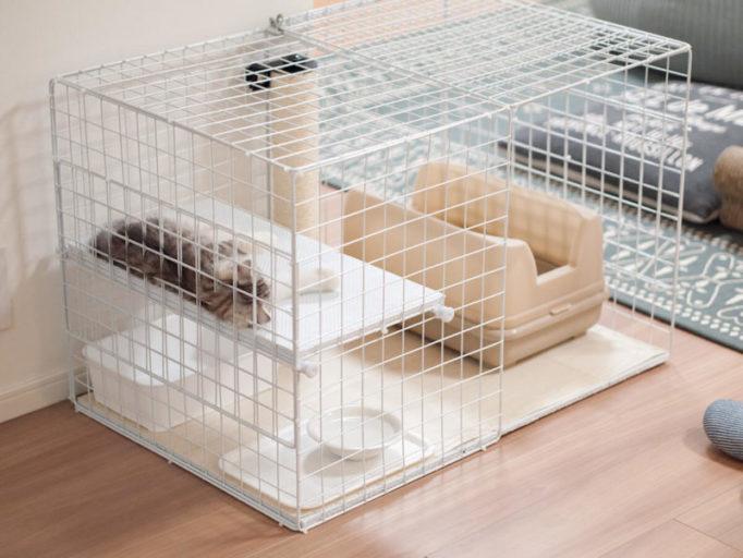 猫ケージの中で寝る子猫