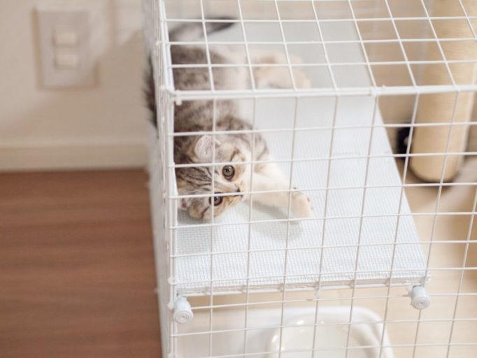 猫ケージの中で見上げる子猫