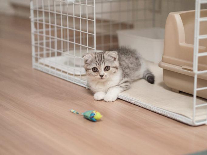 猫ケージに座る子猫