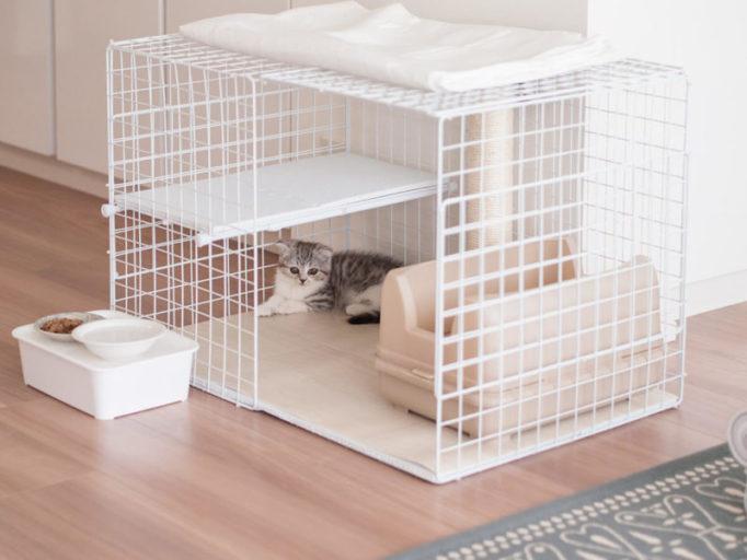 100均の材料で作ったケージの中でくつろぐ子猫