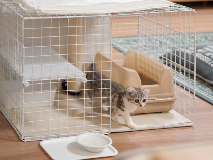 子猫が猫ケージから出てくるところ