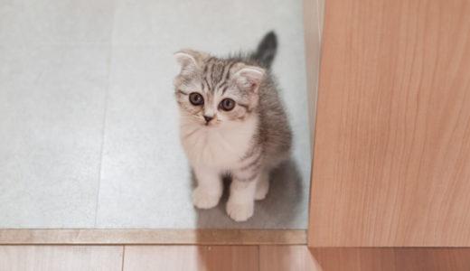 猫トイレのニオイ対策。本当に臭わないオススメ消臭アイテム
