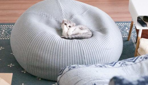 子猫を迎えるお部屋づくり。猫にとって危険なものって?