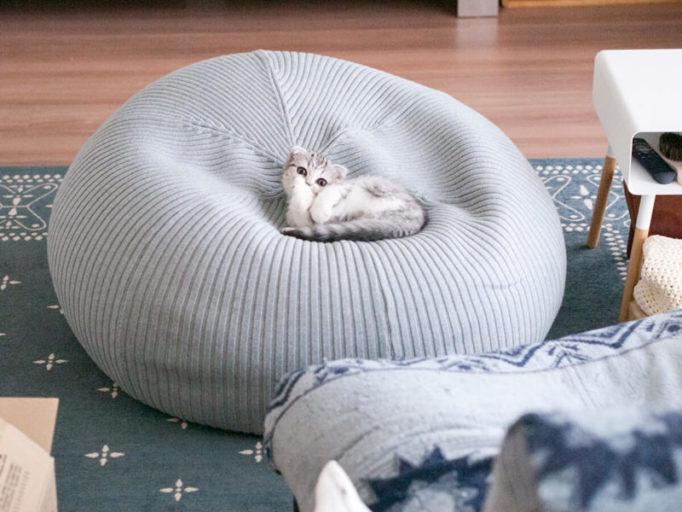 プーフクッションでくつろぐ猫