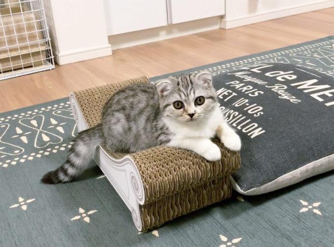 カリカリーナに乗る生後3ヶ月の子猫