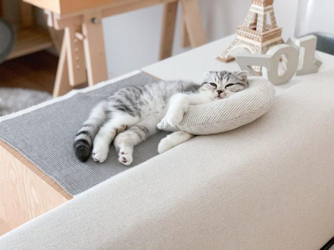 ケリケリピローでくつろぐ猫