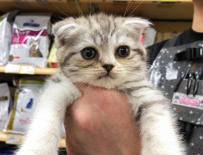生後55日目の子猫