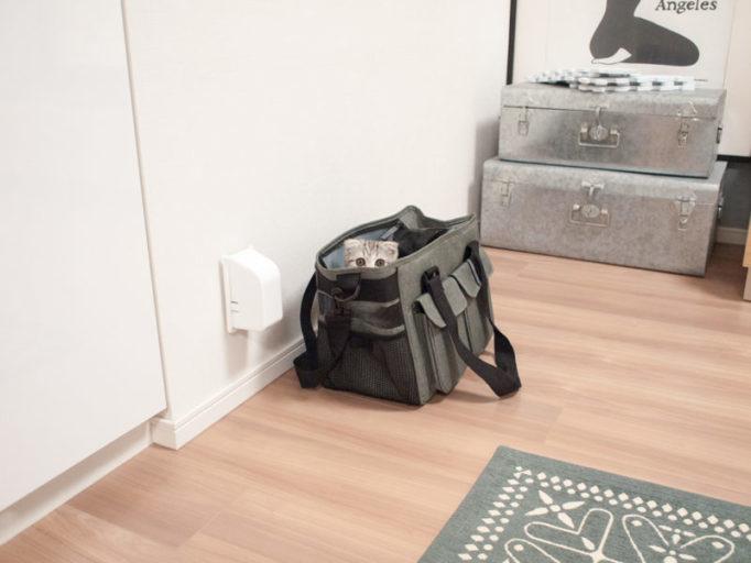 キャリーバッグの中に入ってる子猫