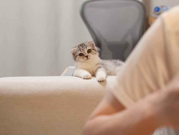 ソファーで待機する子猫
