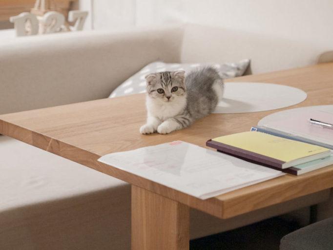 テーブルの上に乗る猫