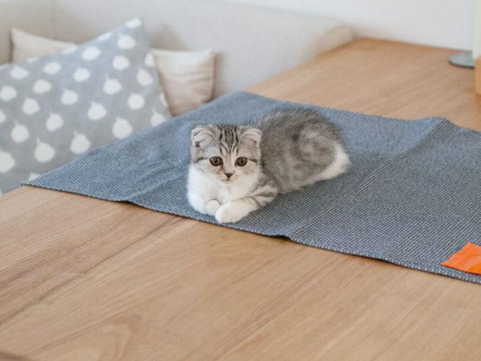テーブルに乗る子猫