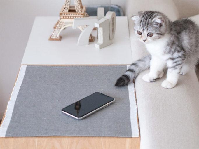 iPhoneと猫