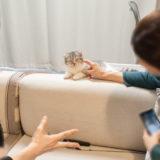 子猫と戯れる人たち