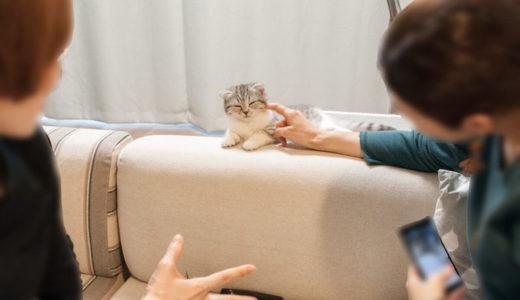 子猫との触れ合い会&猫の成長スピードはマッハ。生後2ヶ月と3ヶ月の違い
