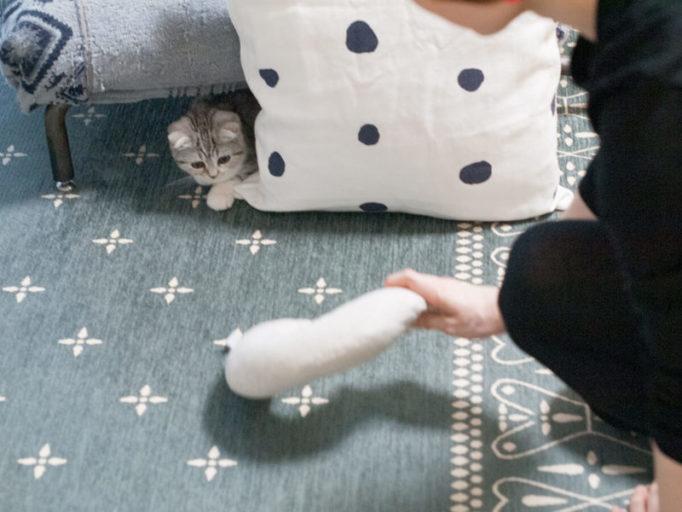 子猫と遊んでるところ