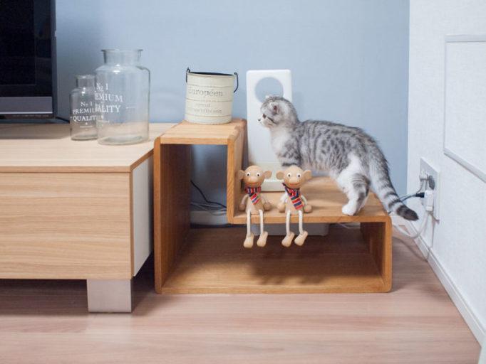 リビングのオブジェと猫