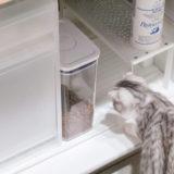 ドライフードを入れた保存容器と猫