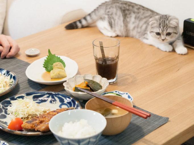 食事中のテーブルに乗る猫
