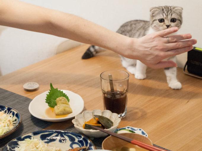 食事に興味を示す猫を阻止するところ
