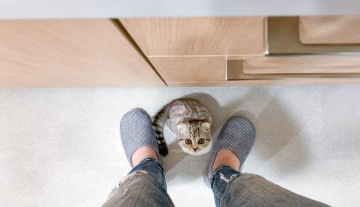 猫をキッチンに上らせない!試したしつけ10通りと現状報告