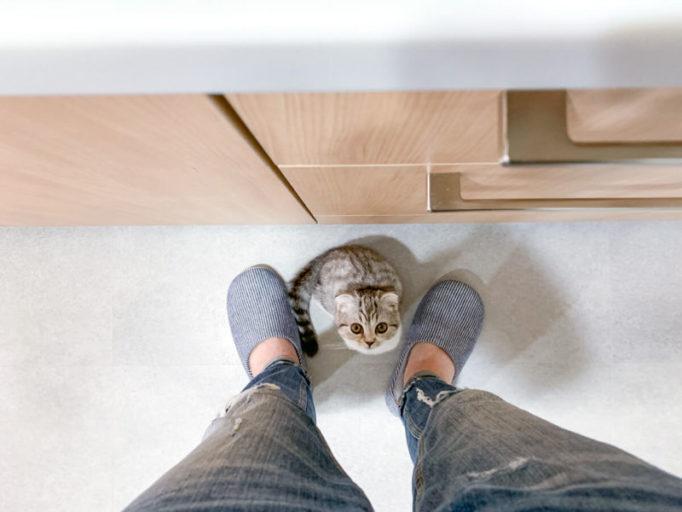 キッチンで飼い主を見上げる猫