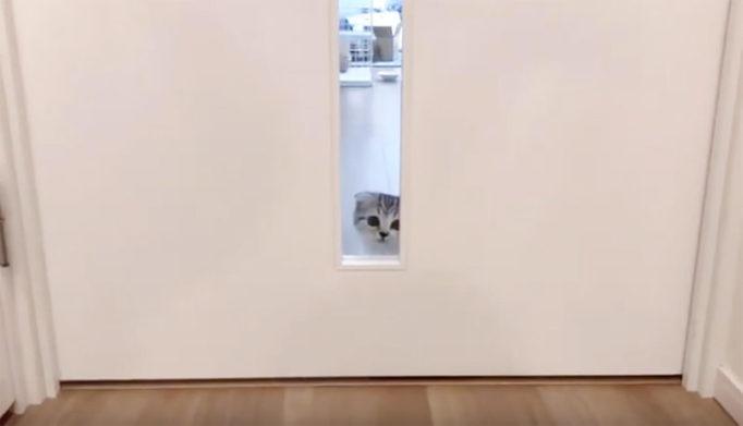 ドアの窓から覗く猫